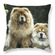 Chow Chow Dogs Throw Pillow
