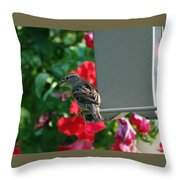 Chow Time At The Bird Feeder Throw Pillow