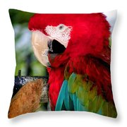 Chowtime Throw Pillow by Karen Wiles