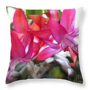 Christmas Cactus Schlumbergera Throw Pillow