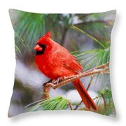 Christmas Cardinal - Male Throw Pillow