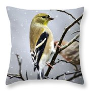 Christmas Goldfinch Throw Pillow by Christina Rollo