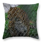 Christmas Leopard I Throw Pillow