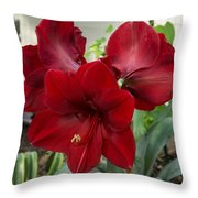 Christmas Red Amaryllis Flowers Throw Pillow