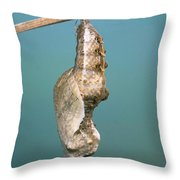 Chrysalis Of Gulf Fritillary Agraulis Throw Pillow
