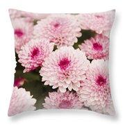 Chrysantemum Pink Throw Pillow