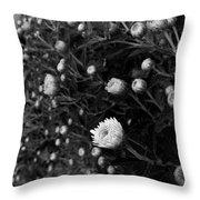 Chrysanthemes Original Throw Pillow