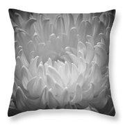 Chrysanthemum - 2 Throw Pillow