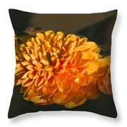 Chrysanthemum Gently Floating In The Fountain Of Campo De Fiori - Rome - Italy Throw Pillow