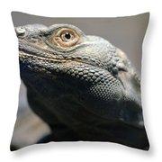 Chuckwalla Throw Pillow