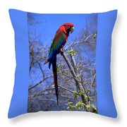 Cincy Parrot Throw Pillow