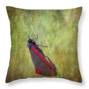 Cinnabar Moth Art Texture Wall Decor. Throw Pillow