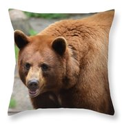 Cinnamon Black Bear Throw Pillow