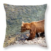 Cinnamon-colored Grizzly Bear By Moraine River In Katmai Np-ak  Throw Pillow