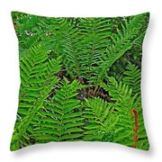 Cinnamon Ferns Along Skyline Trail In Cape Breton Highlands Np-n Throw Pillow