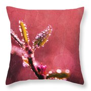 Circles From Nature - C33st04a Throw Pillow