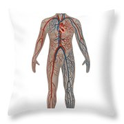 Circulatory System In Male Anatomy Throw Pillow