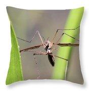 Cirque Du Soleil - Crane Fly Style Throw Pillow