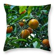 Citrus Sinensis Throw Pillow