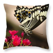 Citrus Swallowtail  Throw Pillow