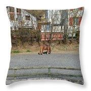 City Horse Throw Pillow