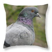City Pigeon Throw Pillow