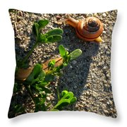 City Snail From Above Throw Pillow