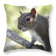 City Squirrel On The Hunt Throw Pillow by Belinda Lee