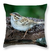 Clay-colored Sparrow Spizella Pallida Throw Pillow