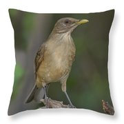 Clay-colored Thrush Throw Pillow
