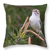Clay-coloured Sparrow Pictures 35 Throw Pillow