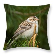 Clay-coloured Sparrow Pictures 50 Throw Pillow
