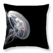 Clear Jelly Fish In Dark Water Art Prints Throw Pillow