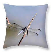 Clear-winged Dragonfly Throw Pillow