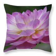 Clearly Gorgeous Throw Pillow