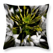 Cleome In Bloom Throw Pillow