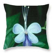 Clerodendrum 1 Throw Pillow