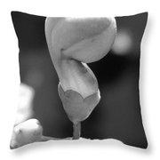 Clerodendrum Ugandense Bud Throw Pillow