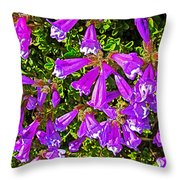 Cliff Penstemon On Watchman Overlook In Crater Lake National Park-oregon Throw Pillow