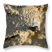 Cliff Swallow About To Fledge Throw Pillow