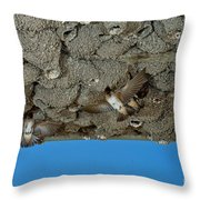 Cliff Swallows At Nests Throw Pillow