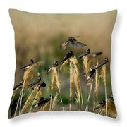 Cliff Swallows Perched On Grasses Throw Pillow