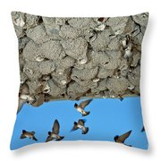 Cliff Swallows Returning To Nests Throw Pillow