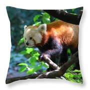 Climbing Red Panda Bear Throw Pillow
