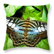 Clipper Butterfly Throw Pillow