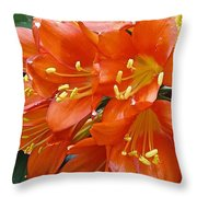 Music Please Clivia Throw Pillow