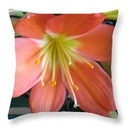 Clivia Throw Pillow