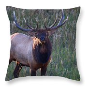 A Subtle Warning Throw Pillow