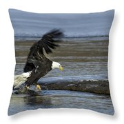 Close To Lunch Time Throw Pillow