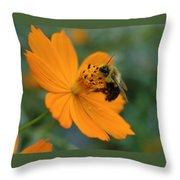 Close Up Bee Feeding On Orange Cosmos Throw Pillow